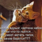 tn_527c32e4b6590