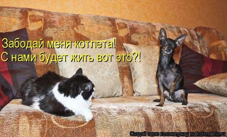 http://kitikis.ru/wp-content/gallery/kote28496-4/tn_0_6ec97_f501cf19_XL.jpg.jpg