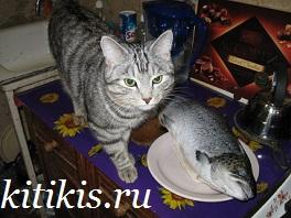 кеша и рыба