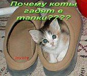 кот в тапке