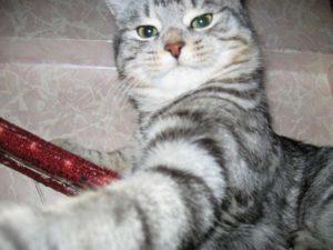 важный кот кеша