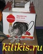 котёнок из коробки выползает