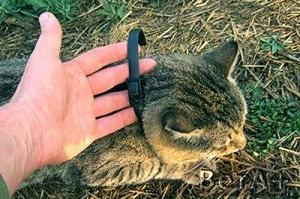 кот в ошейнике от блох