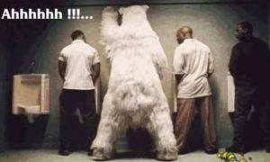 белый медведь в туалете с неграми