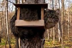 кот в скворечнике