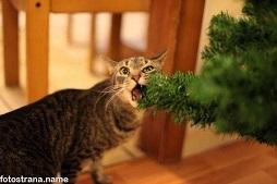 кот жрёт ёлку