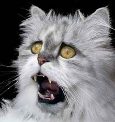 испуганный белый кот