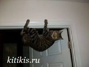 кот на дверном косяке