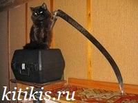 кот с косой