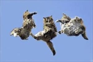 три кота в воздухе