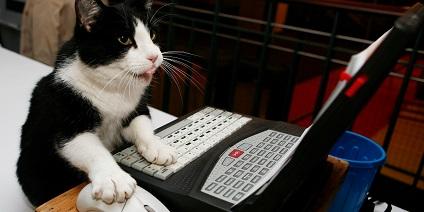 00 кот печатает на компьютере