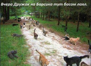 коты идут на разборки