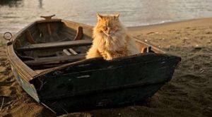 кот в лодке