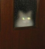 кошка призрак