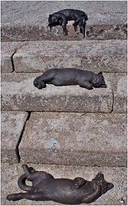 кошки на ступенях