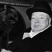 Черчилль и его кот