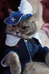 кот мушкетёр