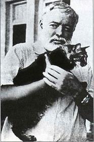 кот хемингуэя
