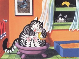 кошки клебана