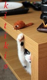 вороватая кошачья лапа