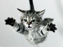 падающий котёнок