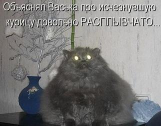 упитанный кот