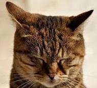 кот двигает ушами