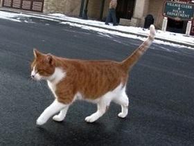 кот фрэдди