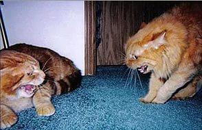 коты угрожают друг дркжке