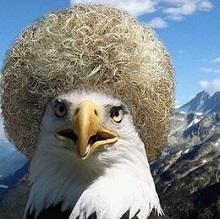 кавказкий орёл