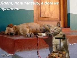 кот, пёс и динамит