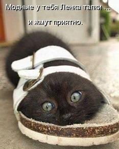 tn_котейка-в-тапочке