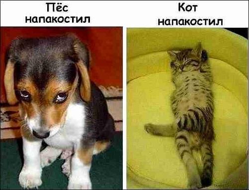кот и пёс напакастили