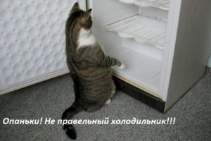 кот и холодильник