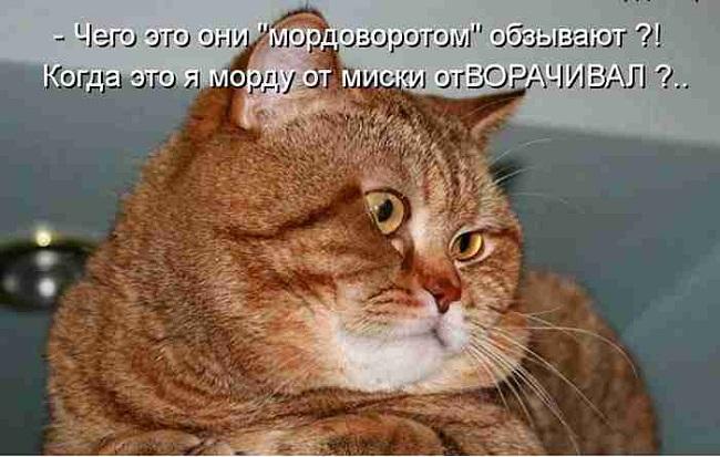 кот мордоворот