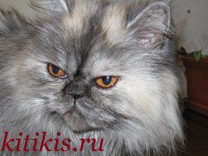 кошка клёпа