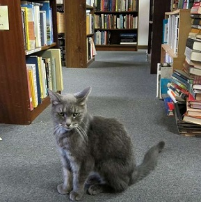 библиотечный кот
