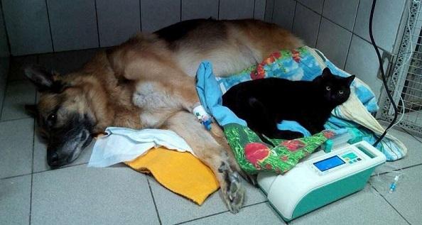 кот ластик и собака