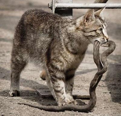 кошка-со-змеёй
