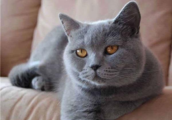 картезианская-кошка