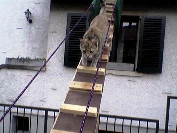 трап-для-кота-в-окно