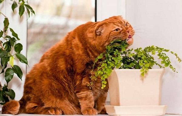 кот жрёт растение