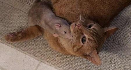 кот рени и крыса арахис
