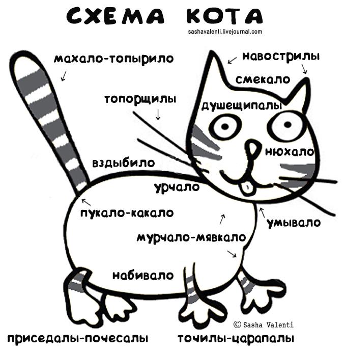 схема-строения-кота.