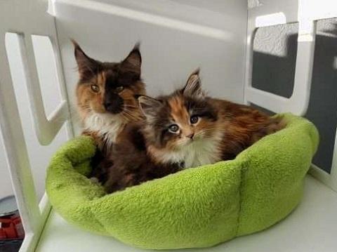 потомство кота