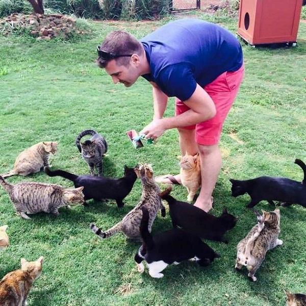 кормёжка кошек