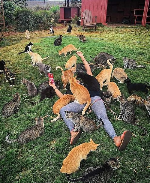 человек с кошками