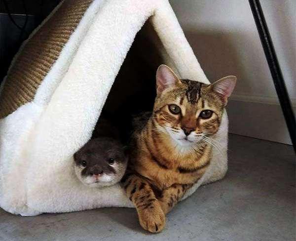 кот с выдрой в домике