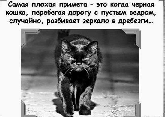 чёрная кошка с ведром