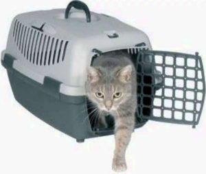 кошка в жёсткой переноске